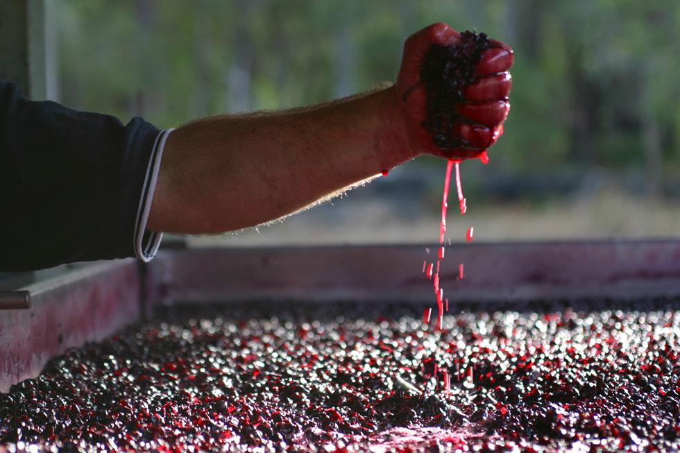 Vendemmia: 5 prodotti da utilizzare per avere un gran vino