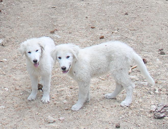 5 regole per salvare cani e gatti dal caldo – Guida Estate 2018