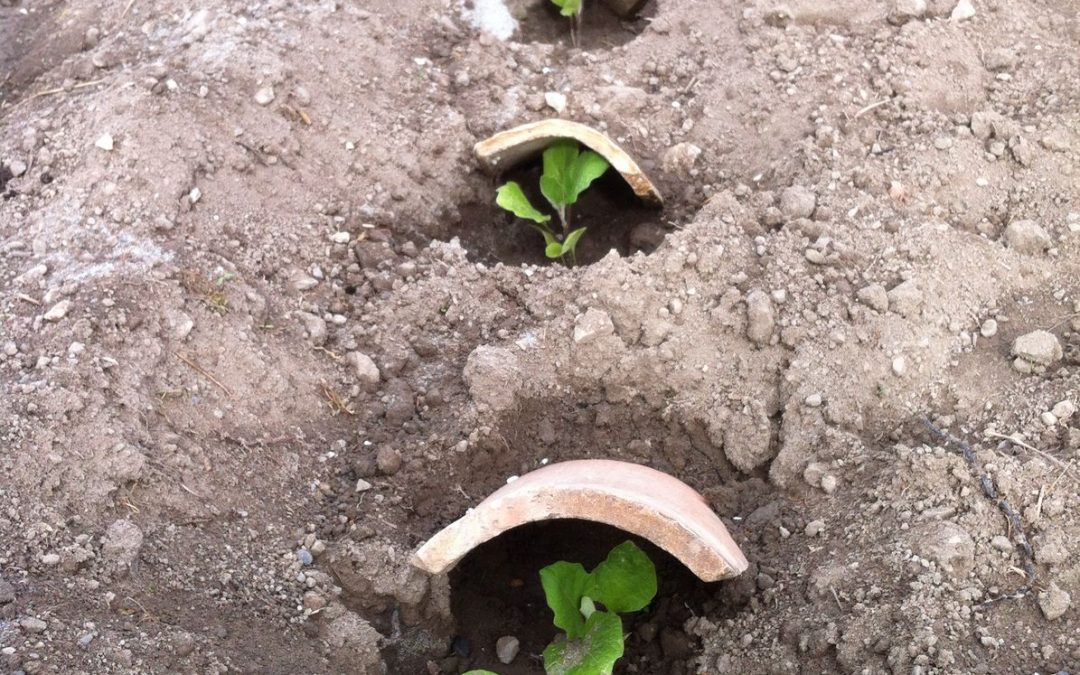 Come proteggere le piante a costo zero