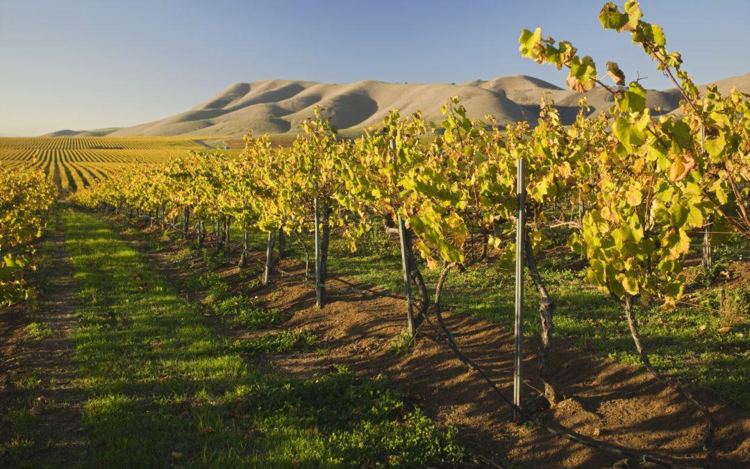 San Martino: la storia del mosto che diventa vino