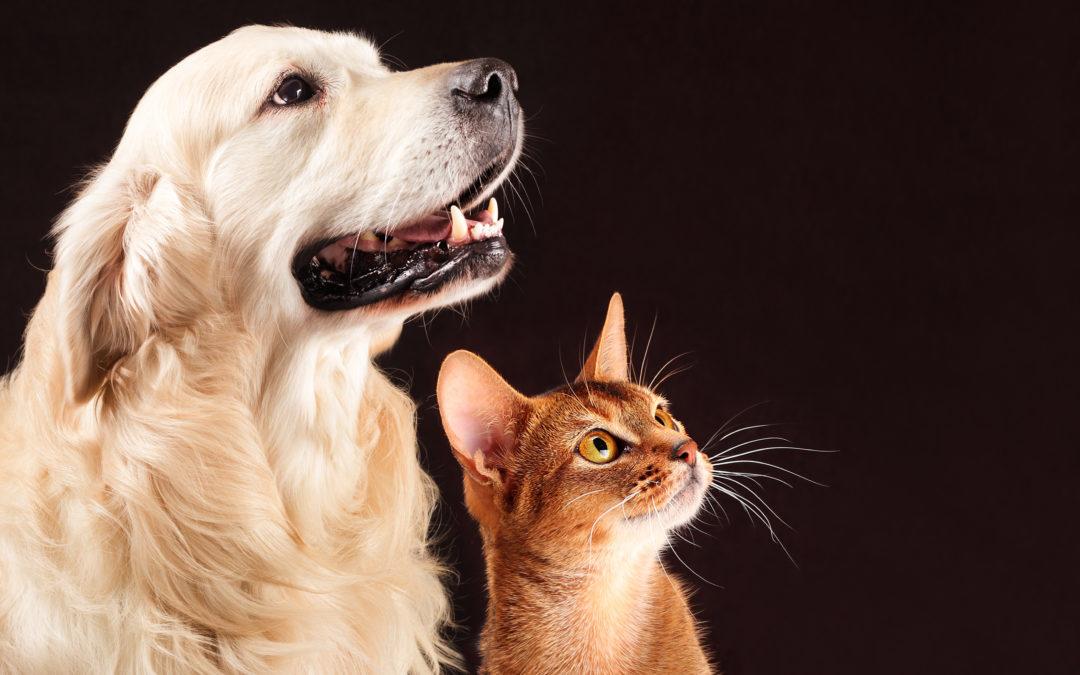 Perché gli animali domestici sono un motivo di conforto per molte persone