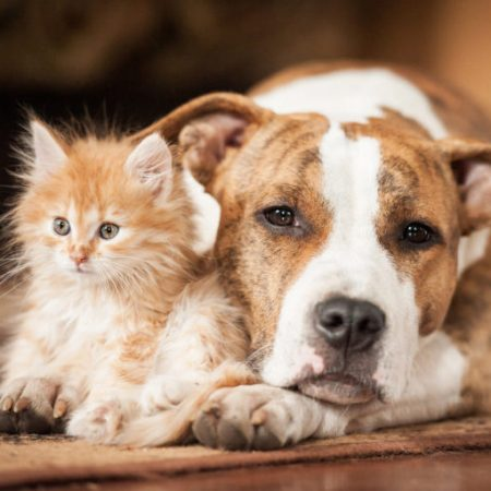 Cani e Gatti BIO